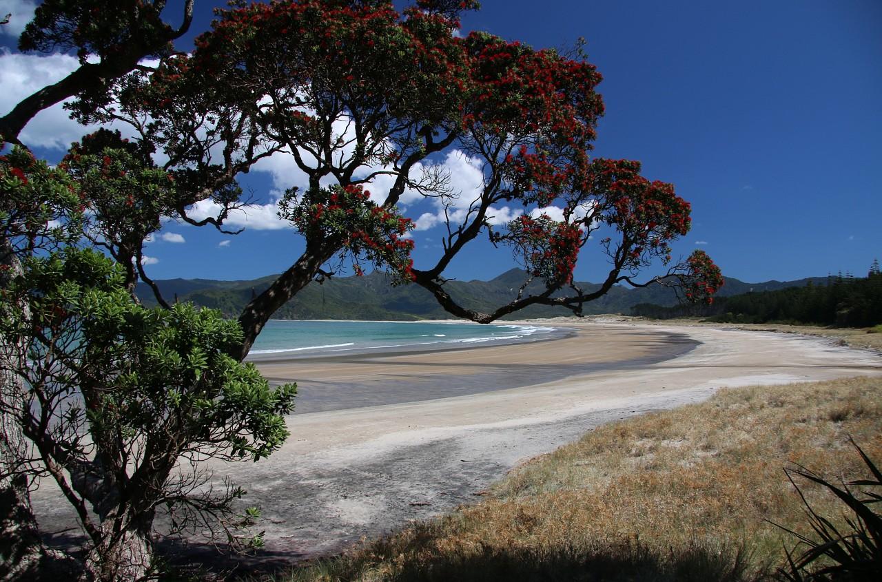 NZ2015_0178.jpg