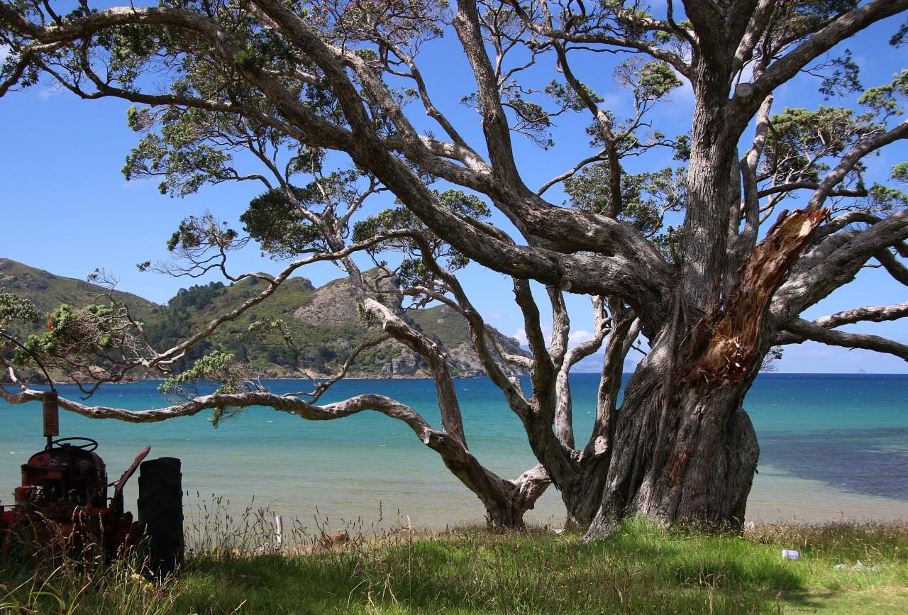 NZ2015_0236.jpg